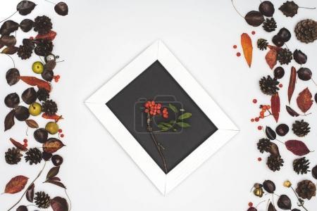Rowan berries in frame
