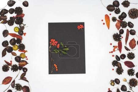 rowan berries and dried leaves