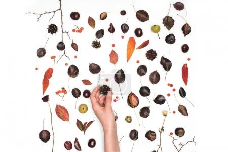 Photo for Partial top view of hand holding pine cone above dried leaves on white - Royalty Free Image