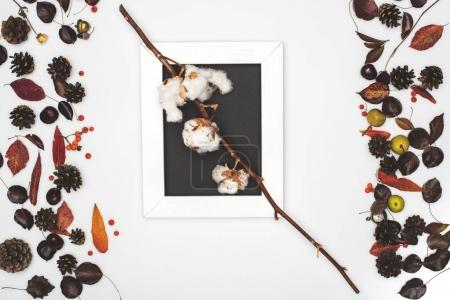 cotton flowers in frame