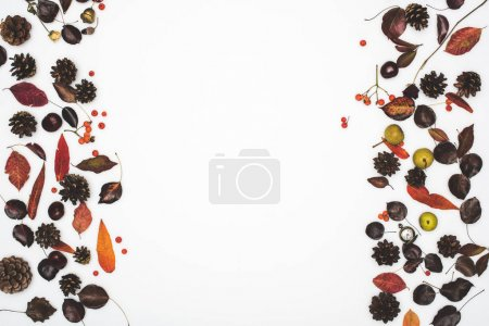 autumn leaves and pine cones