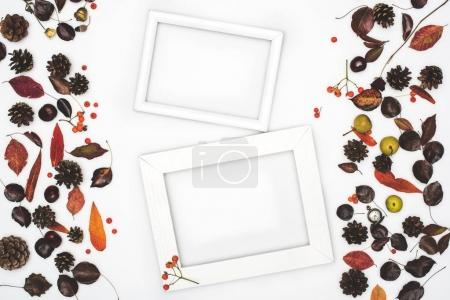 dried leaves and frames
