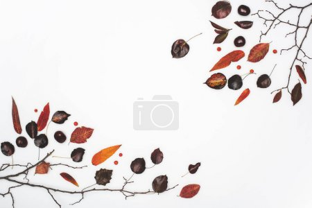 dried autumn leaves and chestnuts