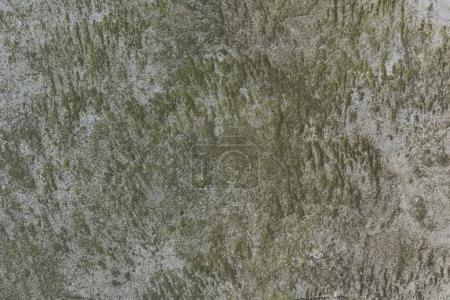 rough wall texture