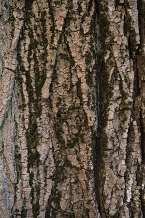 Photo for Close-up view of natural tree bark texture - Royalty Free Image