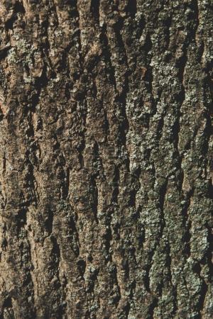 Photo pour Vue rapprochée de la texture d'écorce d'arbre altérée - image libre de droit