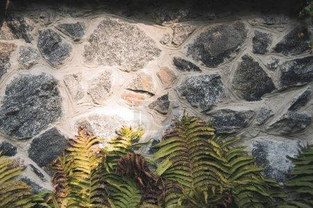 Photo pour Vue rapprochée de la pierre de grunge mur texture avec fougère - image libre de droit