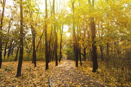 Photo for Pathway in autumn park on sunny day - Royalty Free Image