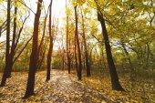 """Постер, картина, фотообои """"Путь в Осенний парк"""""""