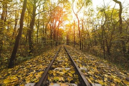 Photo for Railroad in autumn forest on sunny day - Royalty Free Image