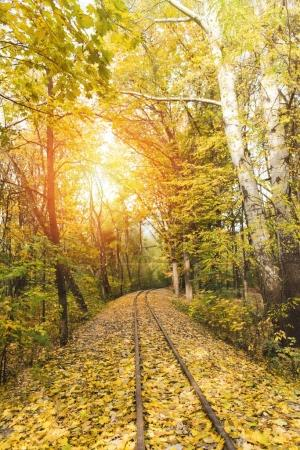 Photo for Railroad in autumn forest with sun shining behind trees - Royalty Free Image
