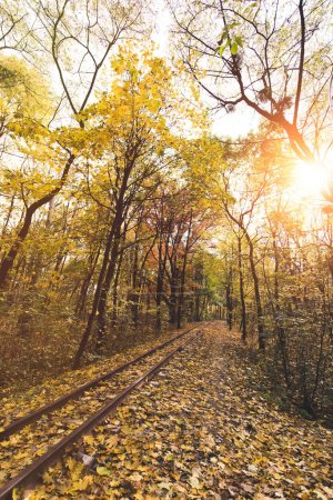 Photo for Railroad in beautiful autumn forest on sunny day - Royalty Free Image