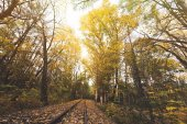 railroad in autumn forest