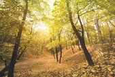 """Постер, картина, фотообои """"Осенний лес в Солнечный день"""""""