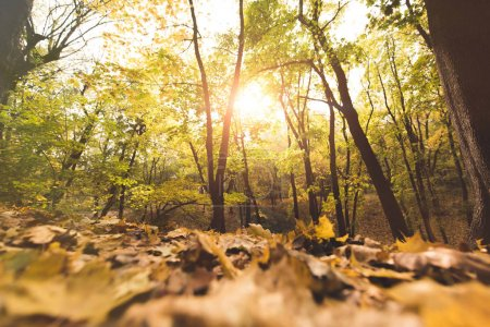 Photo for Close-up shot of fallen leaves in autumn forest on sunny day - Royalty Free Image