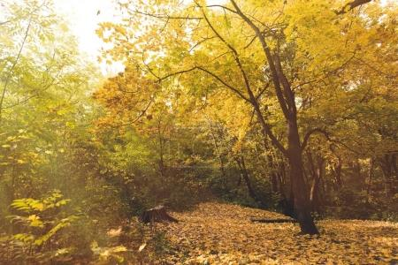 Photo for Beautiful autumn park with ground covered with yellow leaves - Royalty Free Image