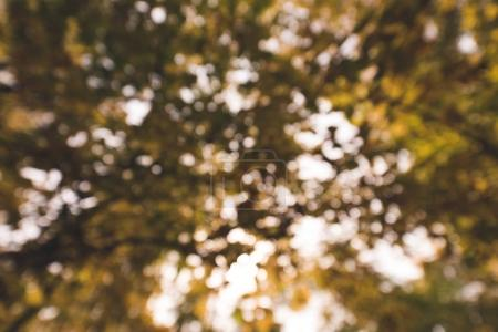 Photo for Blurred shot of autumnal tree branches - Royalty Free Image