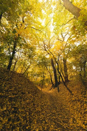 Photo for Beautiful autumn forest covered with yellow fallen leaves - Royalty Free Image