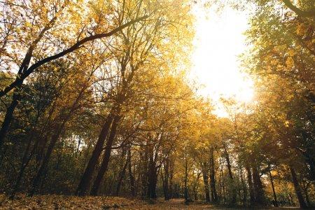 Photo pour Vue du bas du parc d'automne avec des arbres dorés - image libre de droit