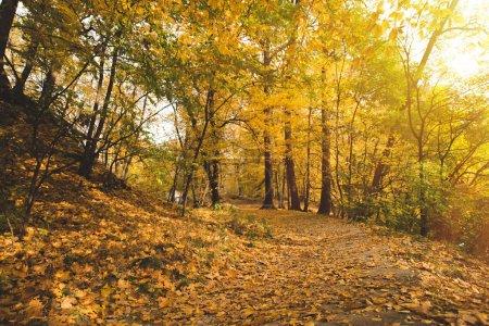 Photo pour Belle forêt d'automne avec soleil qui brille à travers les branches - image libre de droit