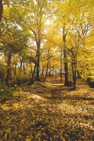 Photo for Pathway in autumn park with golden trees - Royalty Free Image
