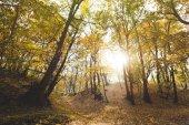"""Постер, картина, фотообои """"красивый осенний лес"""""""