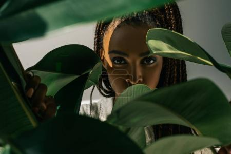 Photo for Close-up portrait of beautiful young african american woman looking at camera through green leaves - Royalty Free Image
