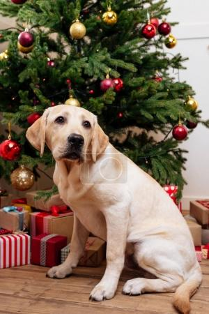 dog sitting at christmas tree