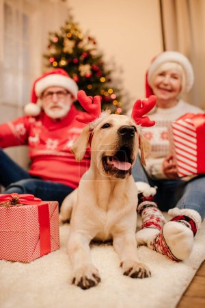 senior couple with gifts and dog