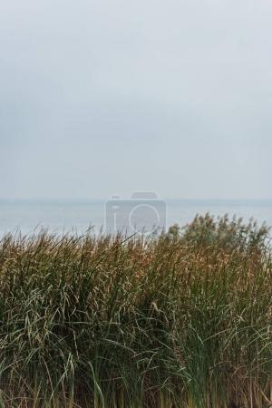 Photo for Beautiful calm sea with green grassweed on foreground on cloudy day - Royalty Free Image