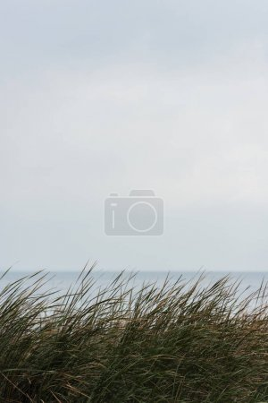 calm sea with grassweed on foreground