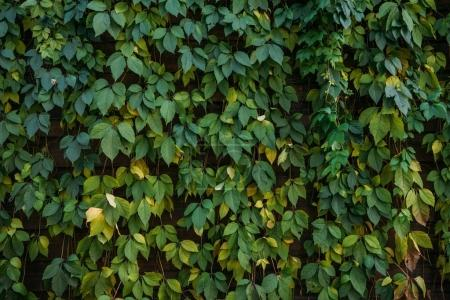Photo for Close-up view of beautiful green leaves floral background - Royalty Free Image