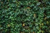 """Постер, картина, фотообои """"зеленые листья"""""""