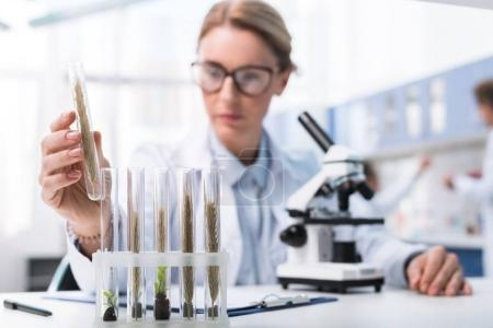 Photo for Chemist in white coat and eyeglasses, examining test tube with sample in chemical lab - Royalty Free Image