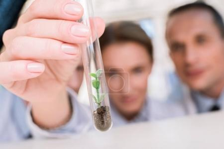 Photo for Professional team of young chemists examining test tube with little plant in lab - Royalty Free Image