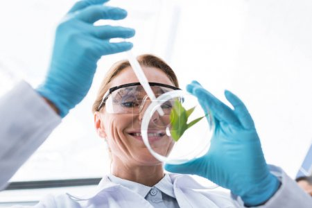 Photo for Close-up view of professional scientist in latex gloves making experiment with petri dish - Royalty Free Image