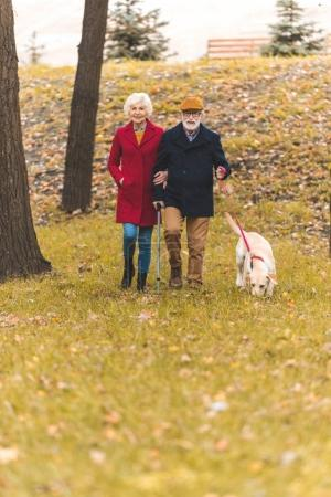 Senior couple walking with dog in park