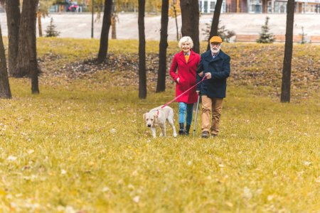 Couple with dog in autumn park