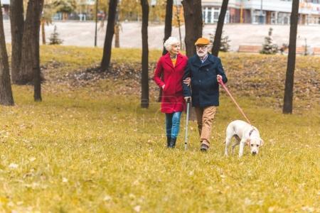 senior couple with dog in autumn park