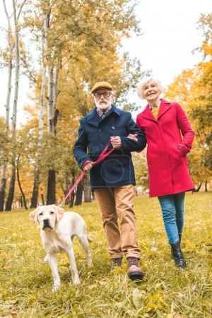 Photo pour Couple sénior marche avec labrador retriever chien dans le parc d'automne - image libre de droit