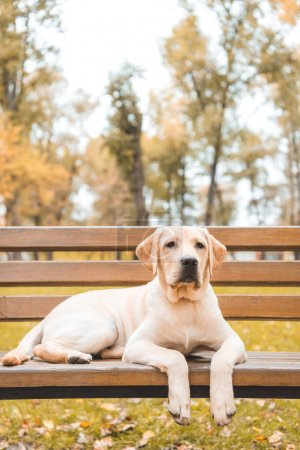 Dog in autumn park