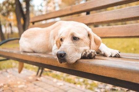 upset dog on bench