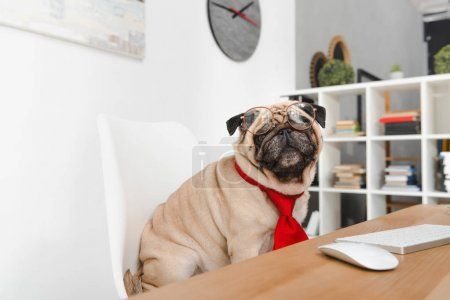 Photo for Funny business pug dog in eyeglasses sitting at workplace - Royalty Free Image