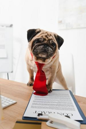 business dog with contract