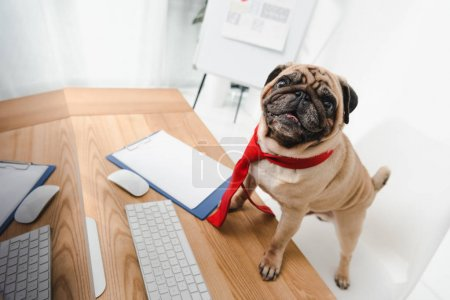 Photo for Funny business dog in necktie looking at camera while standing on table with desktop computer - Royalty Free Image