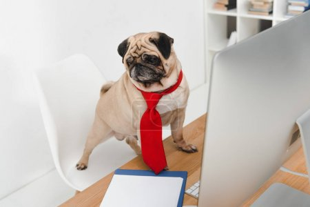 business dog with desktop computer