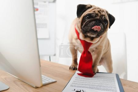 Photo for Funny business dog in red necktie showing tongue out at workplace - Royalty Free Image