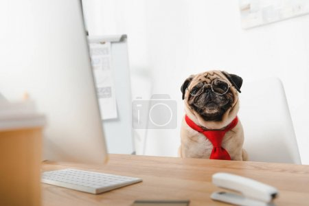 business dog at workplace