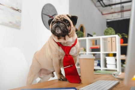 Photo for Business dog in red necktie looking away at workplace - Royalty Free Image