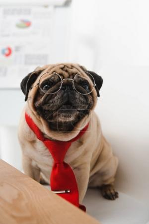 pug in necktie and eyeglasses